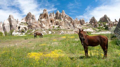 horseback-riding-cover-820x461